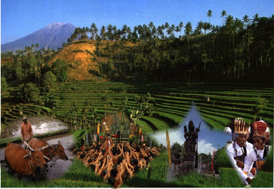 Tour Services in Bali